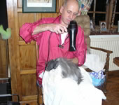 Cat Having its Hair Blow Dried